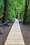 Paseo nativo del bosque Fotografía de archivo