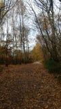 Paseo otoñal con las hojas bastante anaranjadas Fotos de archivo libres de regalías