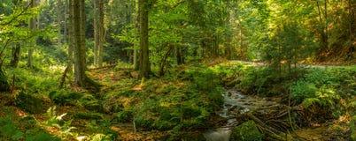 Paseo pasado a través del bosque Imagen de archivo