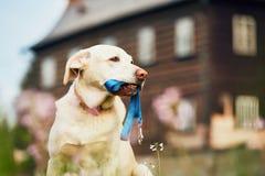 Paseo que espera del perro lindo para foto de archivo libre de regalías