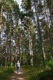 Paseo recreativo en un bosque Fotografía de archivo libre de regalías