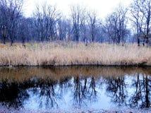 Paseo temprano, árboles que reflejan en el agua Fotografía de archivo libre de regalías