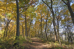 Paseo a través de un bosque de la caída fotografía de archivo libre de regalías