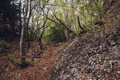 Paseo a través del bosque 3 Foto de archivo
