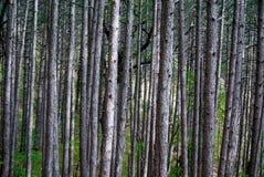 Paseo a través del bosque 2 Fotos de archivo libres de regalías