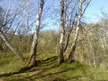 Paseo a través del bosque de la primavera Fotos de archivo libres de regalías