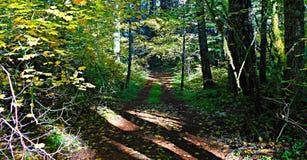 Paseo a través del bosque del arce Foto de archivo libre de regalías