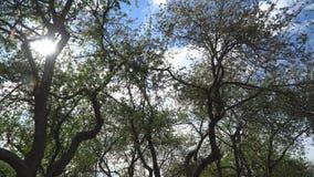 Paseo a través del manzanar floreciente metrajes
