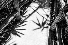 Paseo a través del parque nacional Phuket Fotos de archivo libres de regalías