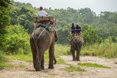Paseo turístico el senderismo del elefante de la aventura a través de la selva imagen de archivo libre de regalías