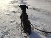 Paseo ventoso del invierno Imagen de archivo libre de regalías