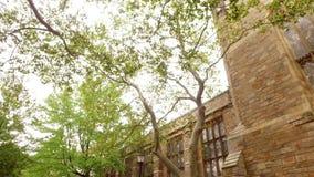 Paseo Yale Campus de Rose almacen de metraje de vídeo