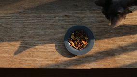 Paseos de gato cerca de una placa con la comida, primer almacen de video