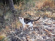 Paseos de gato en hierba seca foto de archivo