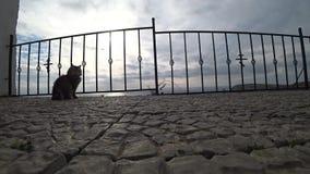 Paseos de gato grises a lo largo de la cerca metrajes