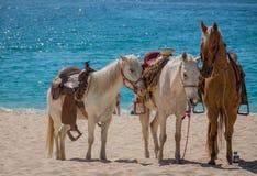 Paseos del caballo de la playa Imágenes de archivo libres de regalías