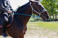 Paseos del muchacho un caballo, sosteniendo el freno imagen de archivo libre de regalías