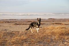 Paseos del perro Foto de archivo libre de regalías