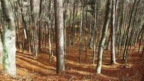 Paseos en bosque del otoño almacen de video