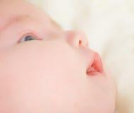 Pasgeboren baby Stock Afbeeldingen