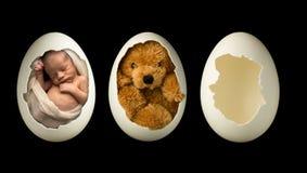 Pasgeboren baby in ei stock afbeelding