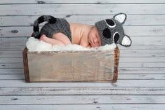 Pasgeboren Babyjongen in een Wasbeerkostuum Stock Afbeelding