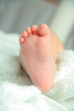Pasgeboren babyvoeten Royalty-vrije Stock Foto's
