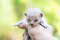 Pasgeboren katje ter beschikking op groene openlucht weinig kat newbie royalty-vrije stock foto