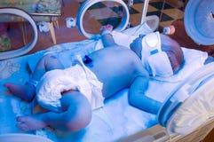 Pasgeboren onder blauwe lamp Stock Foto's