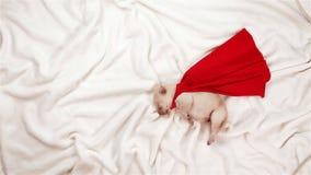 Pasgeboren puppyhond die van het zijn dromen een superhero stock video