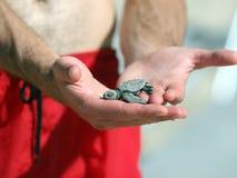Pasgeboren schildpad stock afbeeldingen