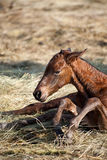 Pasgeboren veulen royalty-vrije stock afbeeldingen