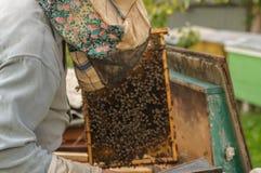 Pashmina lleva a cabo un marco del panal rodeado por las abejas Imagen de archivo libre de regalías