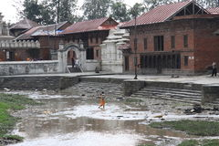 Pashupatinath Tempel stockfoto