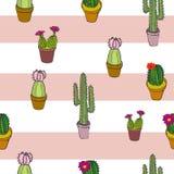 Pasiastego rumienów kaktusów powtórki Kolorowego Inkasowego wzoru druku Bezszwowy wektor royalty ilustracja