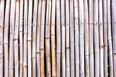 Pasiasty bambusa wzór na rząd tekstury tle Obraz Royalty Free