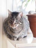 Pasiasty kot kłama na windowsill fotografia stock