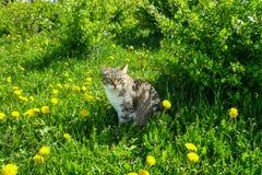 Pasiasty kota obsiadanie na haliźnie Zdjęcie Stock