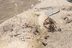 Pasiasty krab na piaskowatej plaży zbliżenie obraz royalty free