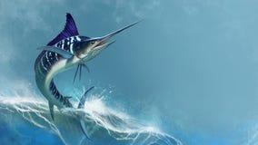 Pasiasty marlin na morzu, rybi kordzik fotografia royalty free