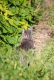 Pasiasty puszysty kot w trawie na zamazanym tle przy rankiem zdjęcie stock