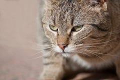 Pasiasty tomcat zdjęcie royalty free
