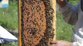 Pasieczników chwyty wewnątrz wręczają ramę z miodowymi honeycombs i pszczołami zbiory wideo
