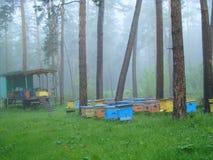 Pasieka w lesie Zdjęcia Royalty Free