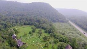 Pasieka w lesie na górze zdjęcie wideo