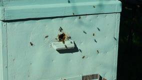 Pasieka z pszczołami zbiory