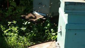 Pasieka z pszczołami zdjęcie wideo