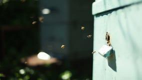 Pasieka z pszczołami i ulem zbiory
