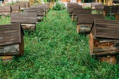 Pasieki składać się z sztuczni roje Wykładający w górę jeden po inny wśród zielonych łąk obrazy stock