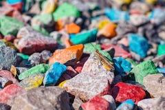 Pasikonik na barwionych kamieniach pod słońcem w tle obraz stock
